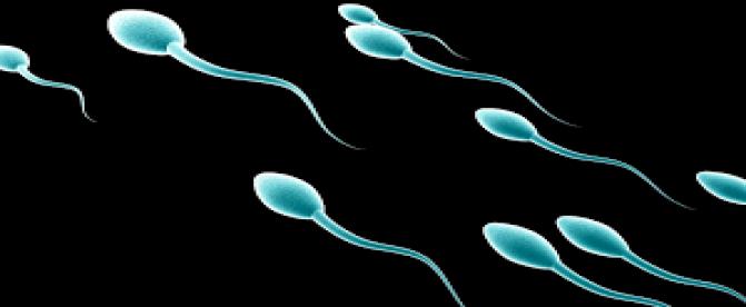 علت غلظت اسپرم  یا مایع منی چیست؟