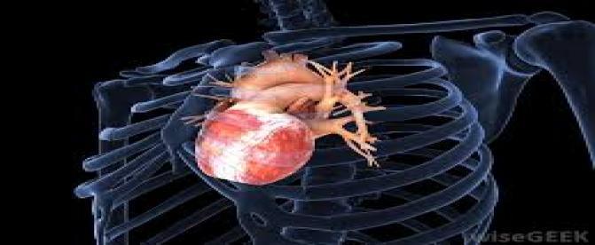 آیا قلب میتواند بافتهای آسیب دیده خود  را  احیا کند ؟