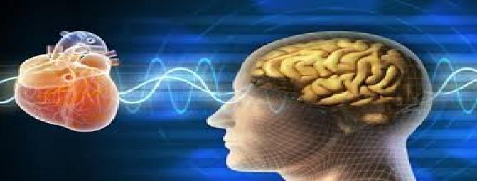 کدام یک مسئول پردازش عواطف  است ؟قلب یا مغز ؟