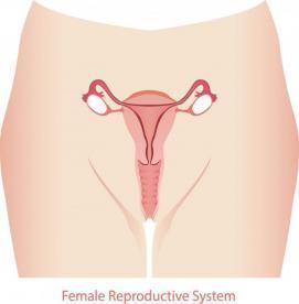 7 نكته كه هر زن بايد در مورد واژن خود بداند!