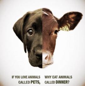 چرا گوشت گاو را می خوریم در حالیکه سگ ها را دوست داریم؟