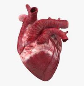 عصبانیت چه تأثیری بر قلب شما میگذارد ؟