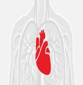 نشستن طولانی مدت و خطرات آن برای قلب