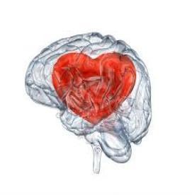 قلب ،مغز چهارم انسان