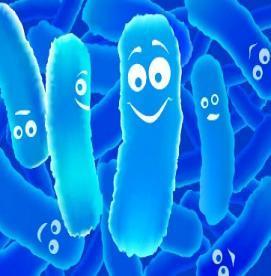 باکتری های مفیدی به نام